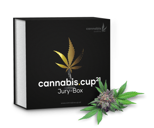 Die neue Cannabis Cup Box mit Tarnmantel